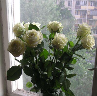 Розы-02