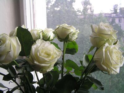 Розы-01