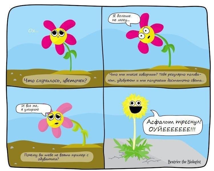 унылый цветочек и бодрый одуванчик